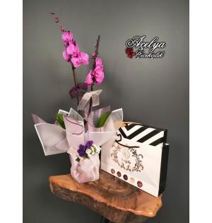 2li Mor Orkide & Çikolata